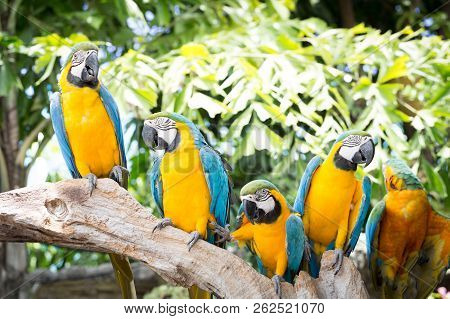 Blue and yellow macaw, Ara ararauna in the zoo stock photo