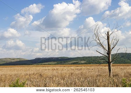 Dried poplar tree with a birdhouse at the Dragoman natural karst Wetland in Sofia Province, Bulgaria - the biggest Bulgarian natural karst wetland and protected sanctuary for birds stock photo