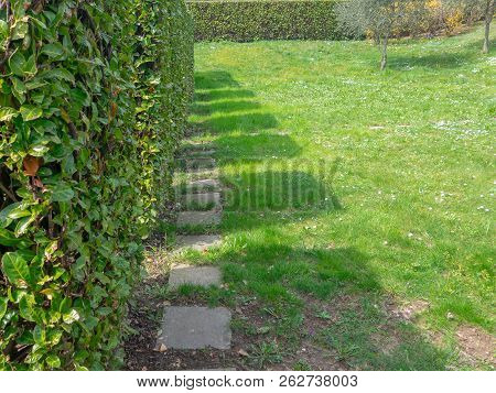 Shadows of square-shaped shrubs standing in a row. Cultural grooming of trees and shrubs in the spring season stock photo