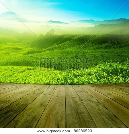 Wood platform landscape view of tea plantation with blue sky in morning. Beautiful tea field Cameron