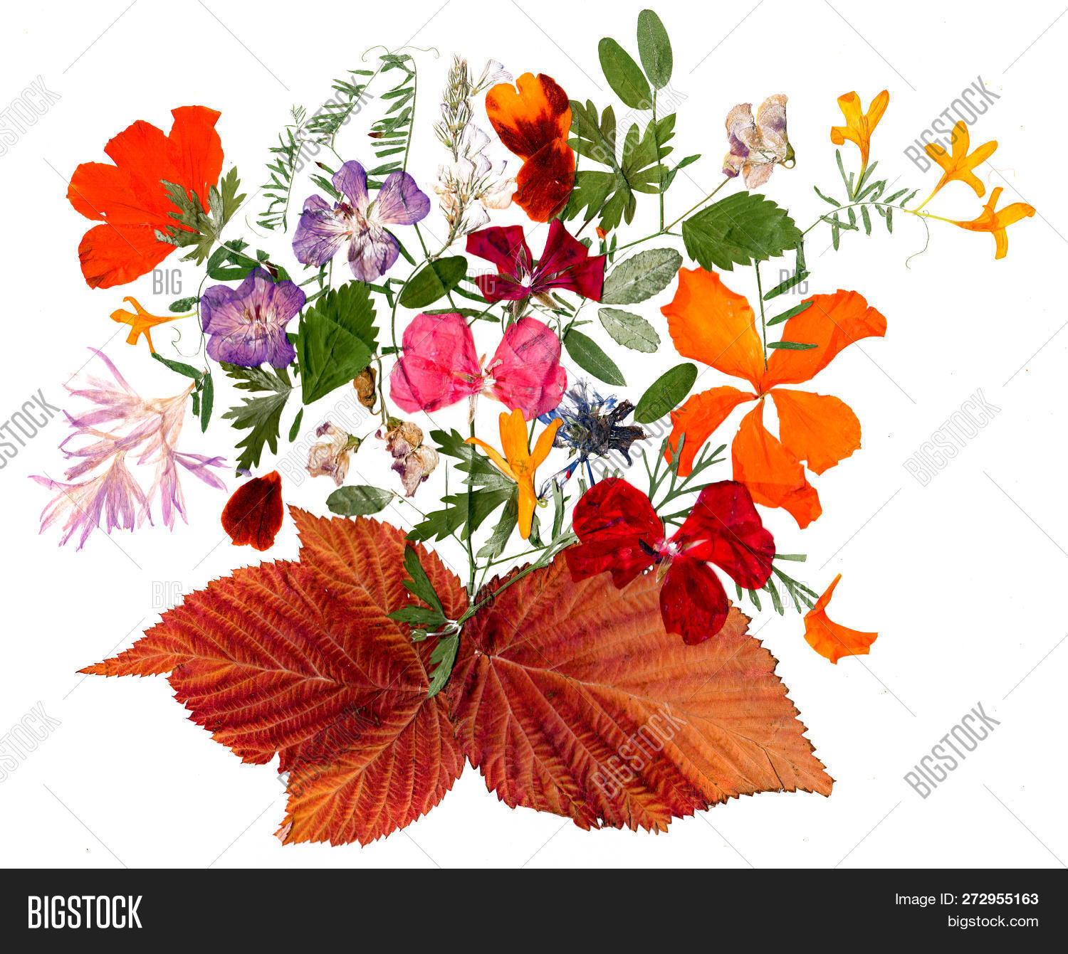 Dried Fall Leaves And Flower Of Plants Isolated On White
