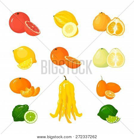 Vector cartoon big Citrus set. Icons isolated. Grapefruit, pomelo, orange, tangerine lemon and lime, and citron, kumquat and buddha hand. stock photo