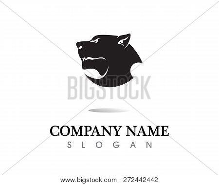 black panther, Tiger, Wild, black wild panther stock photo