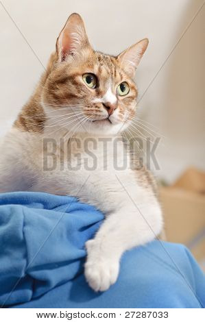 Leadership, cat on man's shoulder with confident expression. stock photo