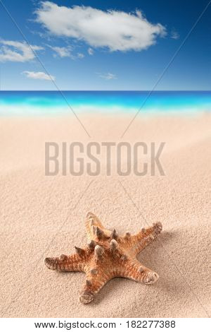 sea starfish on sandy beach. Star fish in sand with clouds and sea in background. Summer holiday vac-Dishwasher Magnet Skin (size 24x24)