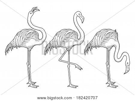 Cute graphic flamingo in the side view. Pretty exotic birds isolated on white background. T-shirt print or tattoo illustraton. Coloring book page design for adults stock photo