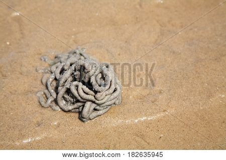 Arenicola marina or lug worm cast by top view stock photo
