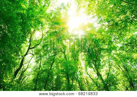 Abstract natural background, fresh green tree foliage in the forest, bright sunlight through tree tw
