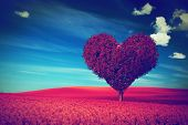 Heart shape tree with red leaves on red blossom field. Love image, idea for Valentine's Day, wedd
