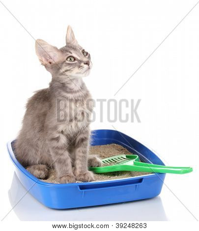 Cat potty training issues