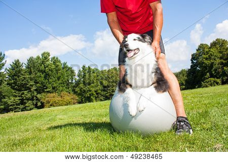 A dog owner helps his dog with stretching tecniques on a Yoga ball in the park. Great to help older dogs maintain healthy joints and flexibility. stock photo