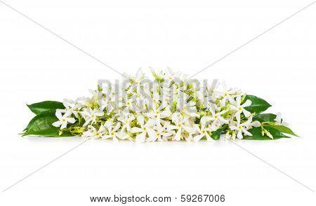 Beautiful Jasmine flowers isolated on white background stock photo