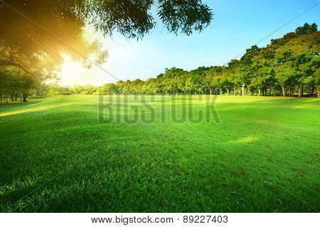 Beautiful Morning Sun Shining Light In Public Park With Green Grass Field And Green Fresh Tree Plant