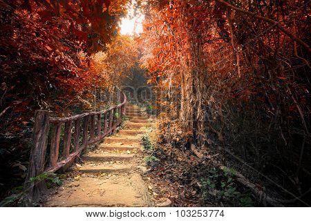 Fantasy Autumn Forest With Path Way Through Dense Trees