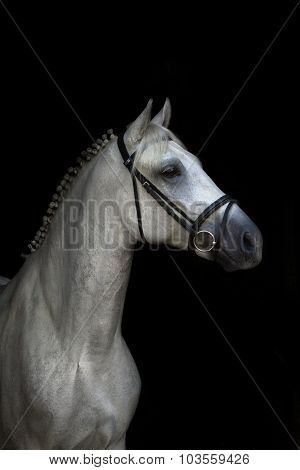 White horse on black-Lg Fridge Magnet Skin (size 36x65)