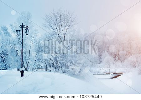 Winter background, landscape. Winter trees in wonderland. Winter scene. Christmas, New Year backgrou