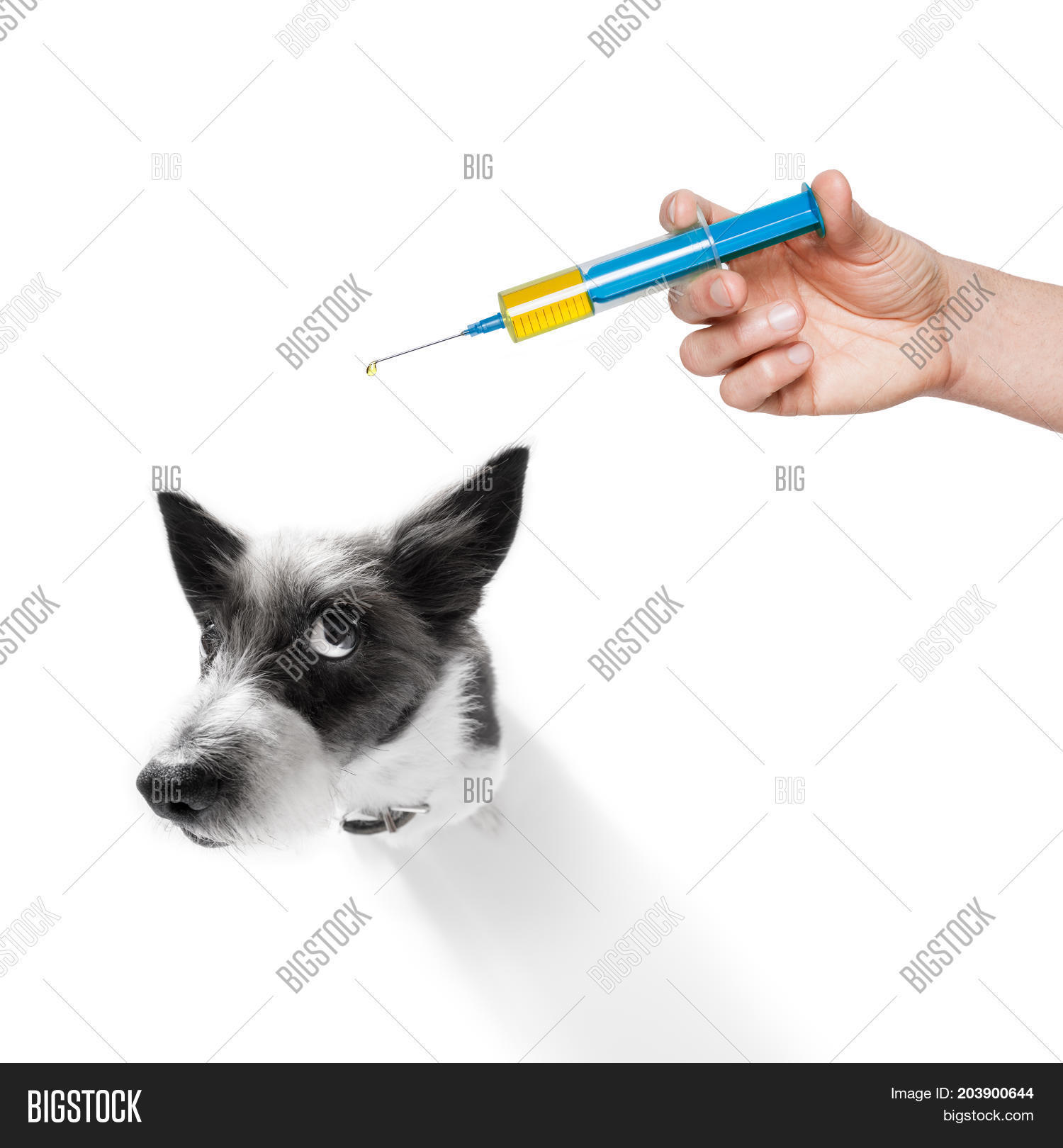 ache,aid,animal,bad,bag,care,cold,cure,disease,doctor,dog,emergency,fever,first,flu,funny,hangover,headache,heal,health,healthcare,hospital,hurt,ice,ill,illness,injury,kit,medication,medicine,pack,pain,pet,poodle,recover,shot,sick,sickness,suffer,syringe,temperature,thermometer,unhealthy,vaccination,vaccine,vet,veterinarian,vitamins