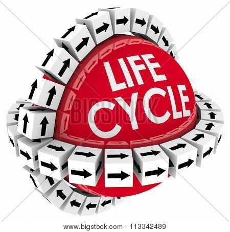 Lifecycle word on a sphere with cubes around it to illustrate a period of time or duration in the life of a product or system stock photo