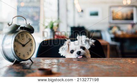 Dog So Cute Wait A Pet Owner At Pet Shop