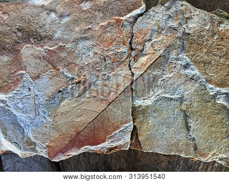 A old fossiled print of a leaf in a stone stock photo