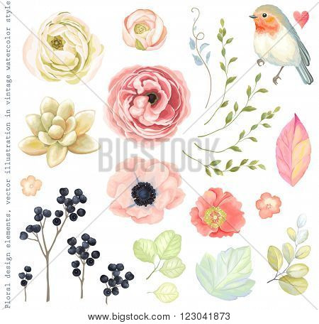 Collection vector flowers ranunculus, anemone, succulent, Robin bird, wild Privet Berry, green branc