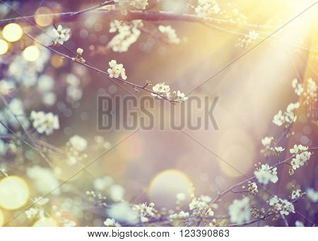 Spring Nature art background with blossom. Beautiful nature scene with blooming tree and sun flare.