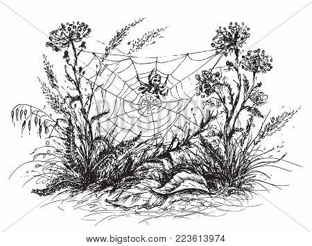 Hand drawn sketch of spider web, grass  and wildflowers. Black and white  floral illustration. stock photo