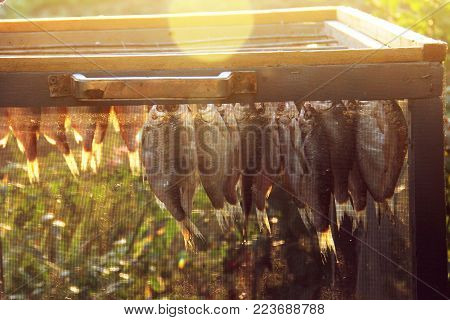 fish roach, ramming is dried after pickling and soaking. Special box for protection against flies insects. Salted and soaked fish hung on metal hooks inmesh aerated box Dried jerky vobla ramming carp. stock photo