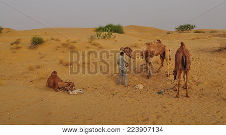 A man with camels on Thar desert in Jaisalmer, Rajasthan State of India. stock photo