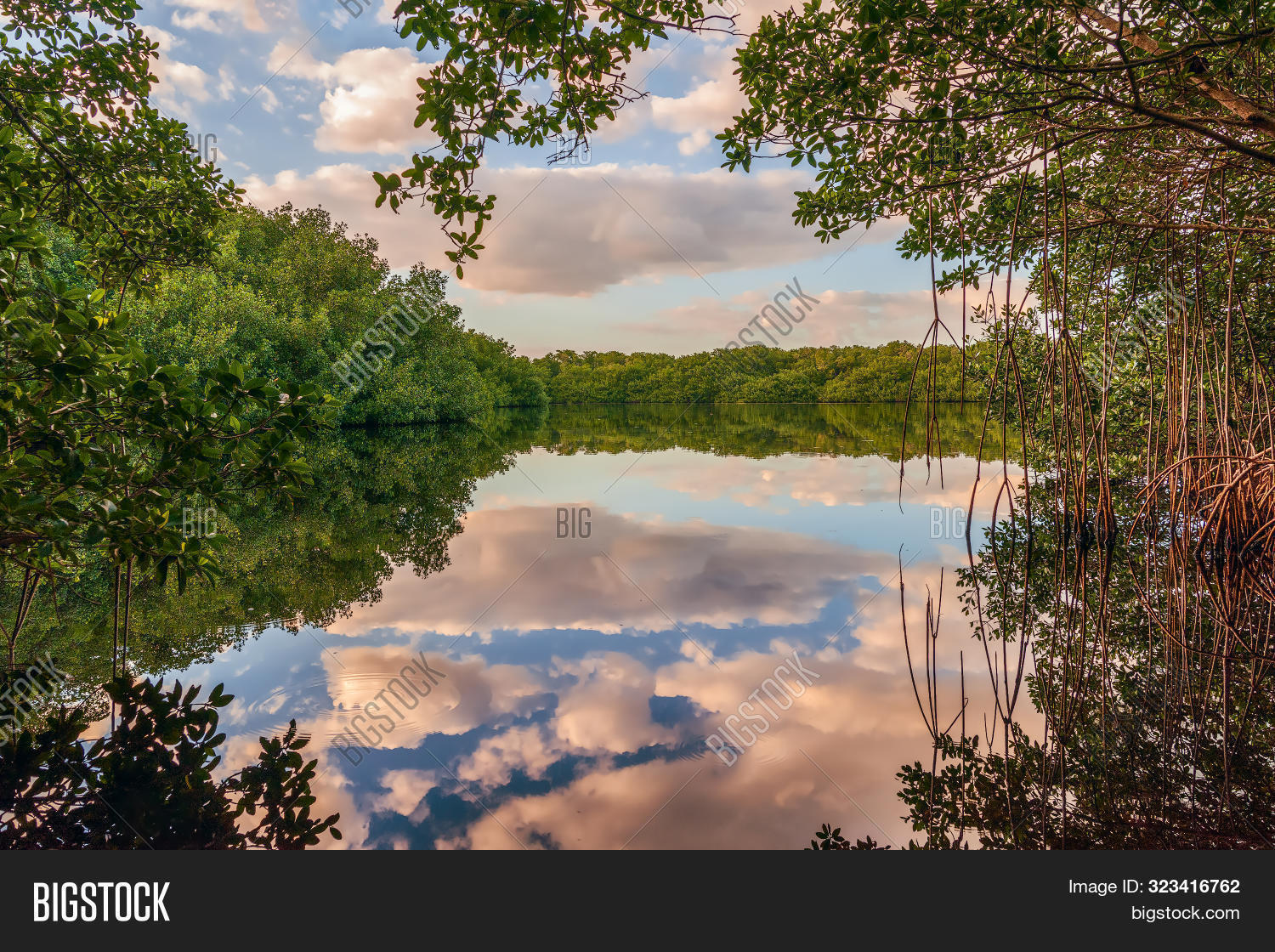 Coot Bay Pond in Everglades National Park. Florida. USA