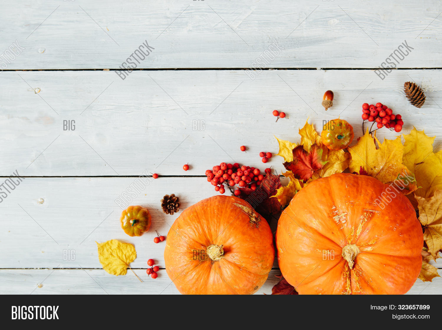 agriculture,autumn,autumnal,background,brown,copy,decoration,dry,fall,foliage,food,frame,halloween,happy,holiday,leaf,leaves,maple,menu,natural,nature,orange,organic,plant,pumpkin,red,season,space,table,thanksgiving,variety,white,wood,wooden,yellow