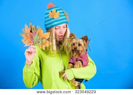 Take Care Pet Autumn. Veterinary Medicine Concept. Health Care For Dog Pet. Regular Flea Treatment.