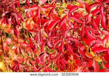 Autumn branches. Autumn red leaves. Natural pattern made by nature. Colorful season. Beautiful autumn background. Autumn leaves backdrop. Fall season advertisement. Nature beauty. Natural colors. stock photo