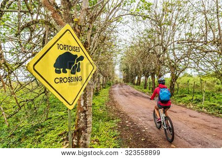 Galapagos Giant Tortoise funny sign and woman tourist cycling on bike on Santa Cruz Island on Galapagos Islands. Animals, nature and wildlife video of tortoise in highlands of Galapagos, Ecuador. stock photo