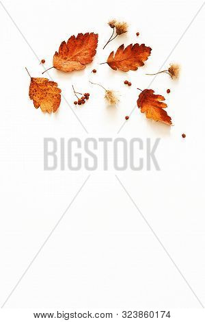 Autumn composition. Frame made of flowers, dried leaves on gray background. Autumn, fall, thanksgiving day concept. Flat lay, top view, copy space stock photo