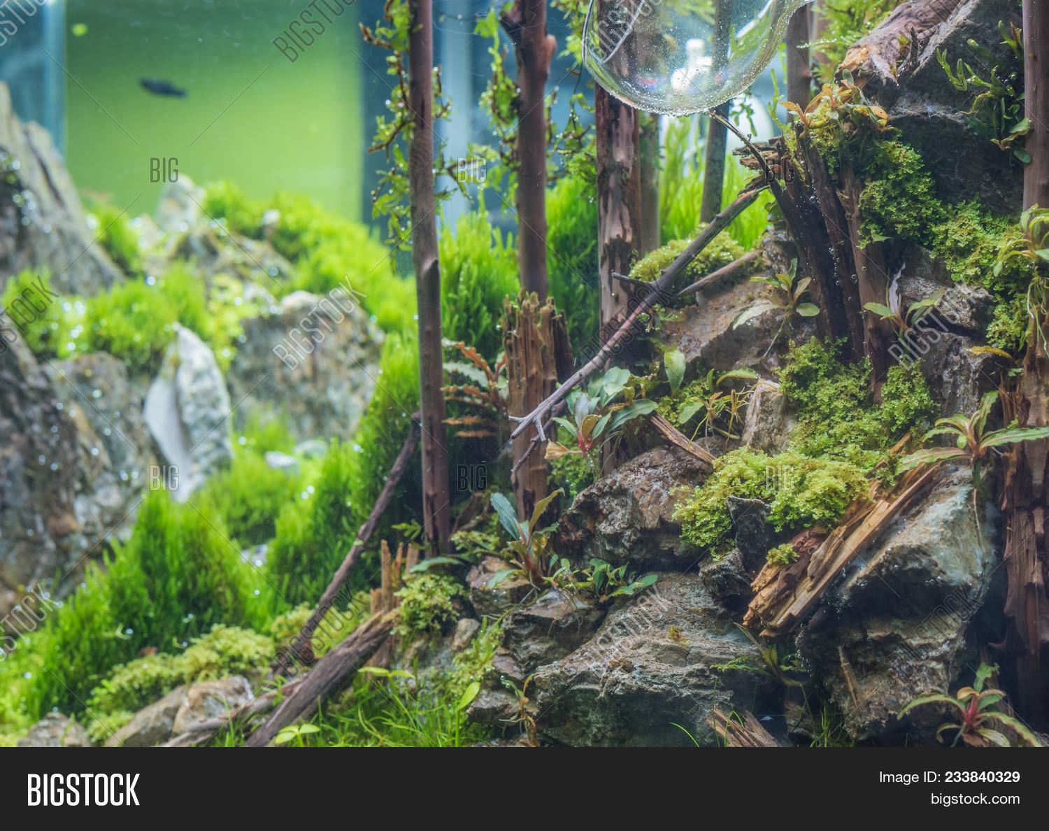Close Up Image Of Forest In Nature Style Aquarium Tank With A Variety Of Aquatic Plants Inside Image Stock Photo 233840329