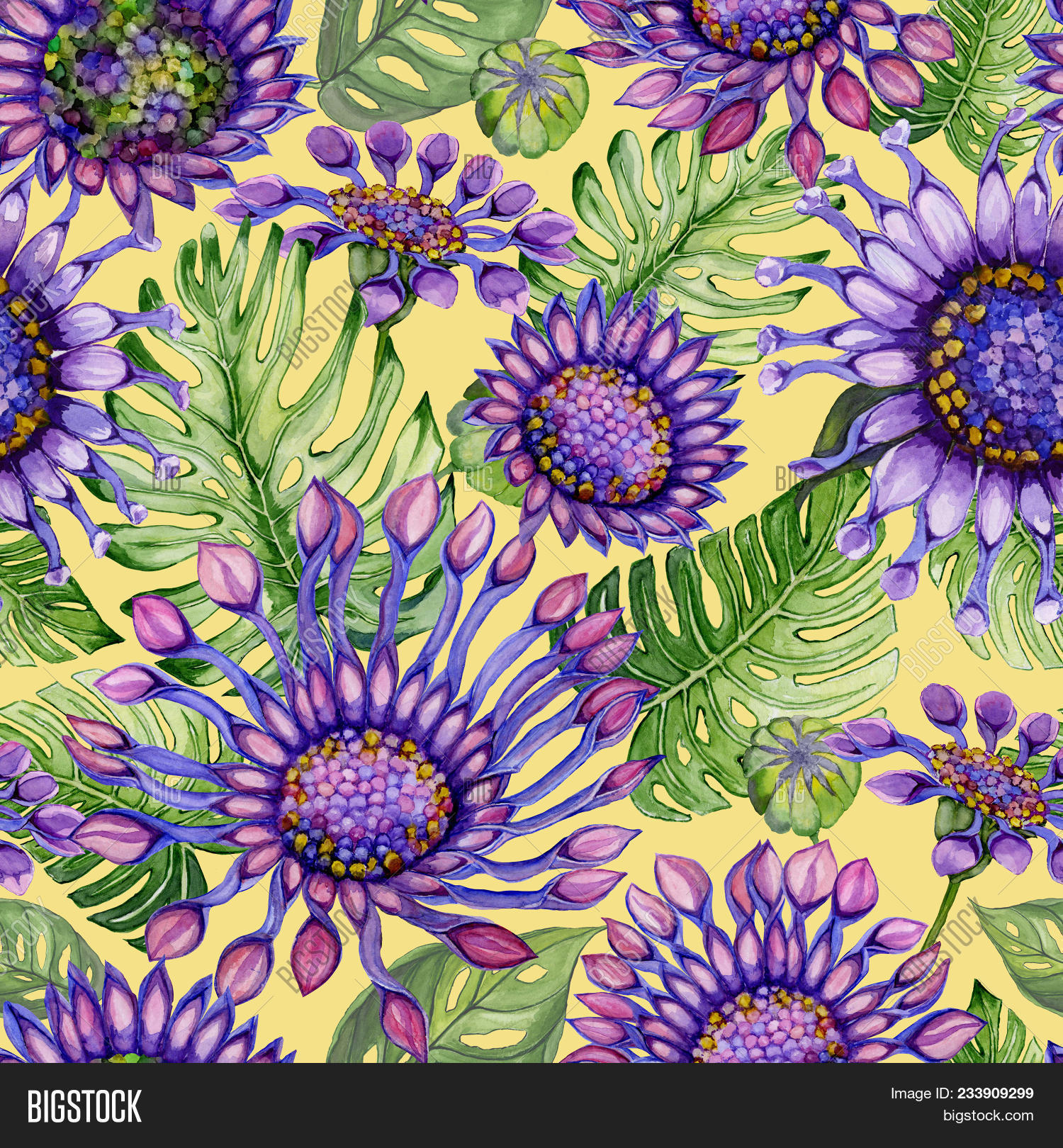 Beautiful Large Vivid African Daisy Flowers With Green Monstera