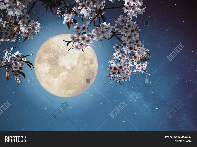 Romantic night scene beautiful cherry blossom sakura flowers in background beautiful izmirmasajfo