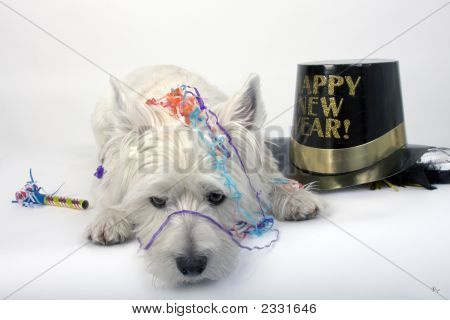 West Highland Terrier lying down amid confetti and a black and gold Happy New Year hat. stock photo