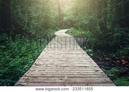 Wooden Pathway Through Forest Woods In The Morning. Summer Nature Travel And Journey Concept, Toned