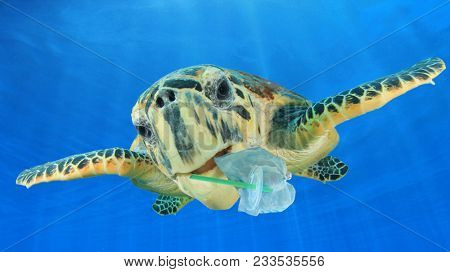 Plastic underwater pollution problem. Sea Turtle eating discarded plastic straw and bags. Environmen