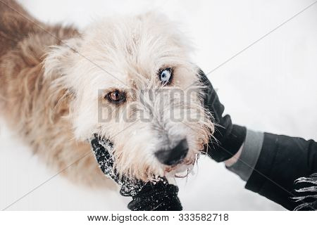 adorable mixed breed dog portrait outdoors in winter stock photo