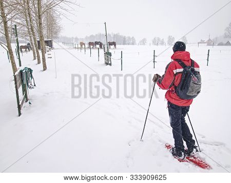 Winter hiking in the mountains on snowshoes with a backpack.  Hiker walk around electric fence of horse paddock. stock photo