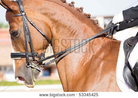 Beautiful Spanish horse color in outdoor exhibition stock photo