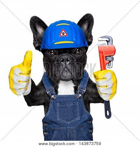 handyman french bulldog dog worker with helmet and plumber wrench in paws ready to repair fix everything at home isolated on white background thumb up stock photo