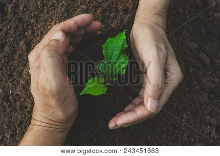 Hand Of Person Protection Growing Young Plant On Fertile Soil For Agriculture Or Save Earth,nature C