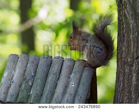 the furry squirrel eats nuts. Photo near the tree. Feeding trough. stock photo
