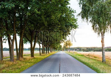 Road in field accompanied by row of green trees, skyline and nature on background. Landscape of flat terrain at sunset. Road looks alluringly to wanderlust. Roads and travels concept. stock photo