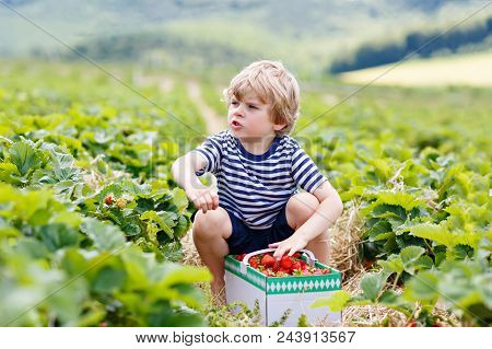 Happy adorable little kid boy picking and eating strawberries on organic berry bio farm in summer, on warm sunny day. Funny child having fun with helping. Strawberry plantation field, ripe red berries stock photo