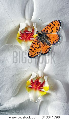 bright red butterfly on white orchid flowers. butterfly on flowers. colorful tropical background. spotted fritillary butterfly. stock photo